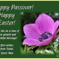 Happy Passover! Happy Easter!