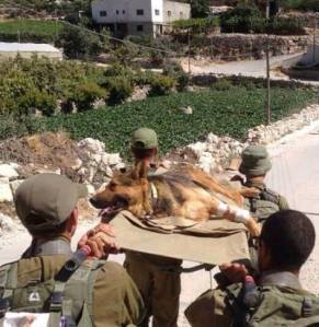Thank you to the IDF soldiers defending the Nation of Israel and their four legged friends. May you all come home safe.