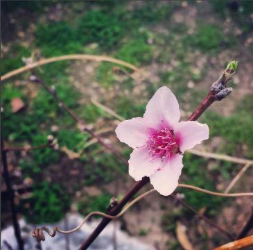 new-flower
