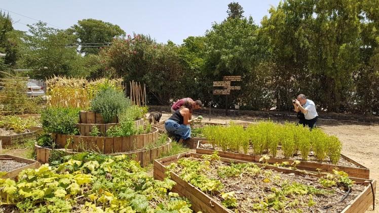 Hashomer hachadash - planting | inspirationfromzion.com